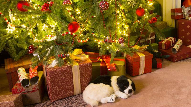 Cane, accorgimenti a Natale