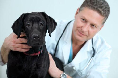 Controlli dal veterinario
