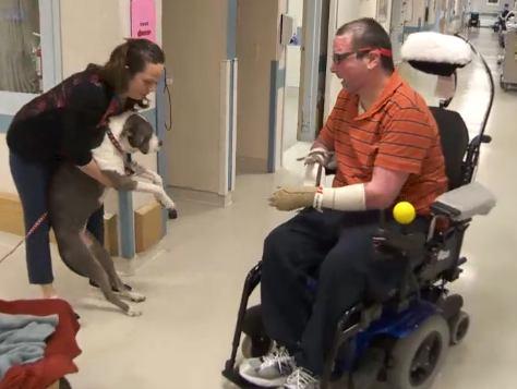 Elsa cane per il recupero fisico e psicologico di un paziente