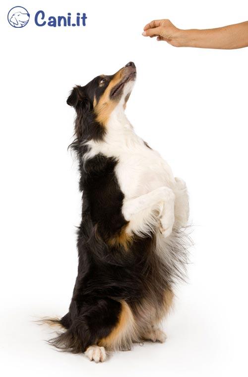 Usare l'astuzia per somministrare la medicina al cane