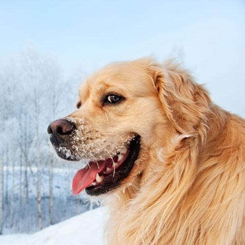 Pelo del cane in inverno