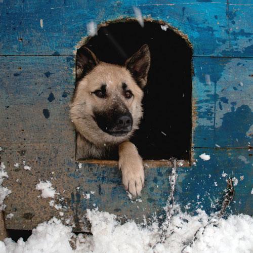 Cuccia del cane all'aperto