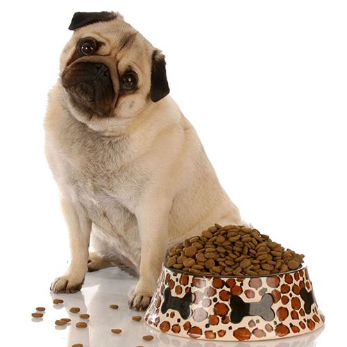 Dar da mangiare al cane dopo il parto