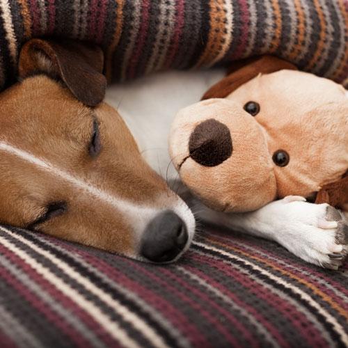 cane riposa su un ambiente caldo